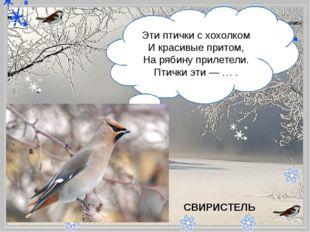 - Эти птички с хохолком И красивые притом, На рябину прилетели. Птички эти