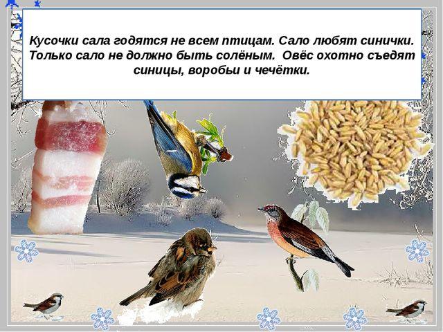 - Кусочки сала годятся не всем птицам. Сало любят синички. Только сало не...