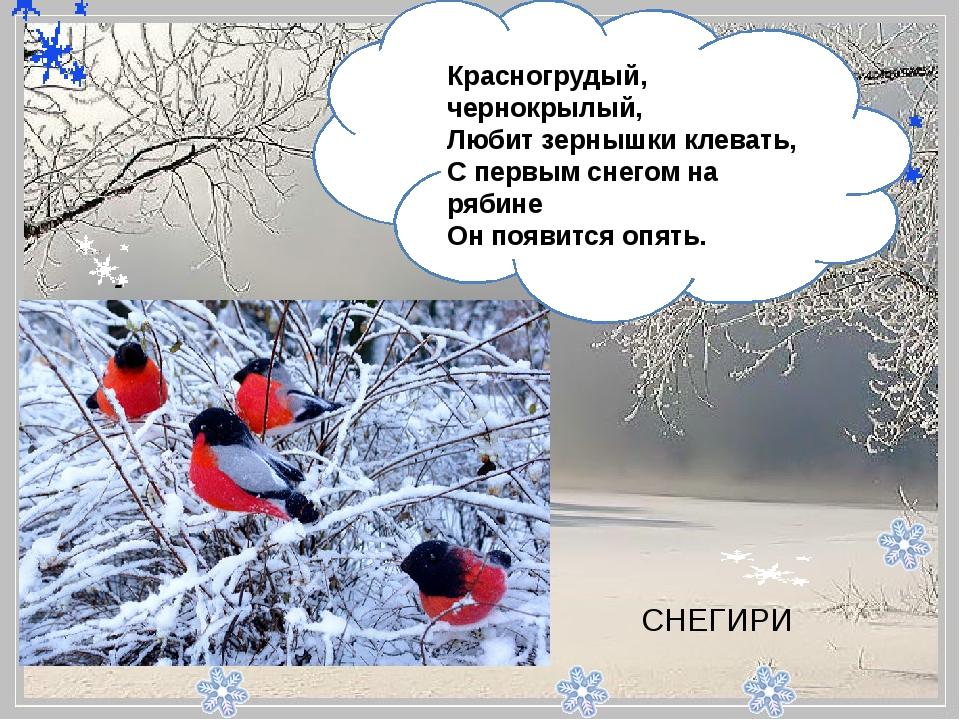 - Красногрудый, чернокрылый, Любит зернышки клевать, С первым снегом на ря...