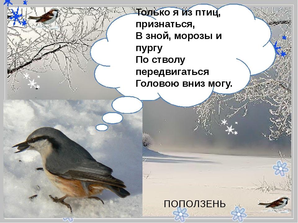 - Только я из птиц, признаться, В зной, морозы и пургу По стволу передвига...