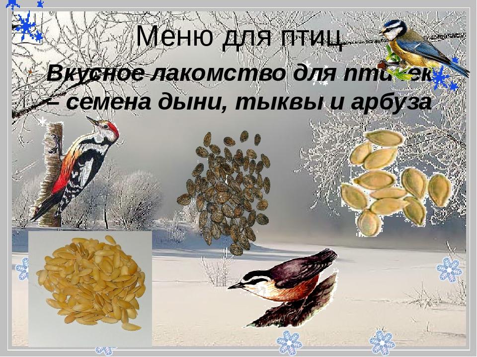 - Меню для птиц Вкусное лакомство для птичек – семена дыни, тыквы и арбуза