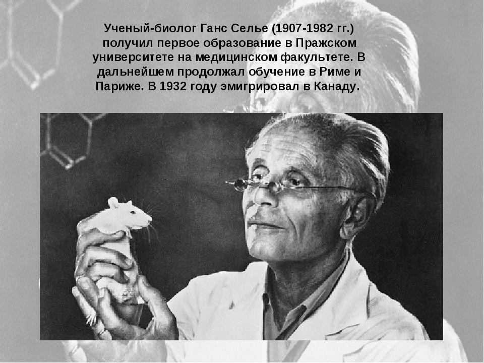 Ученый-биолог Ганс Селье (1907-1982 гг.) получил первое образование в Пражско...