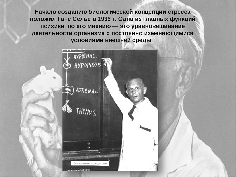 Начало созданию биологической концепции стресса положил Ганс Селье в 1936 г....