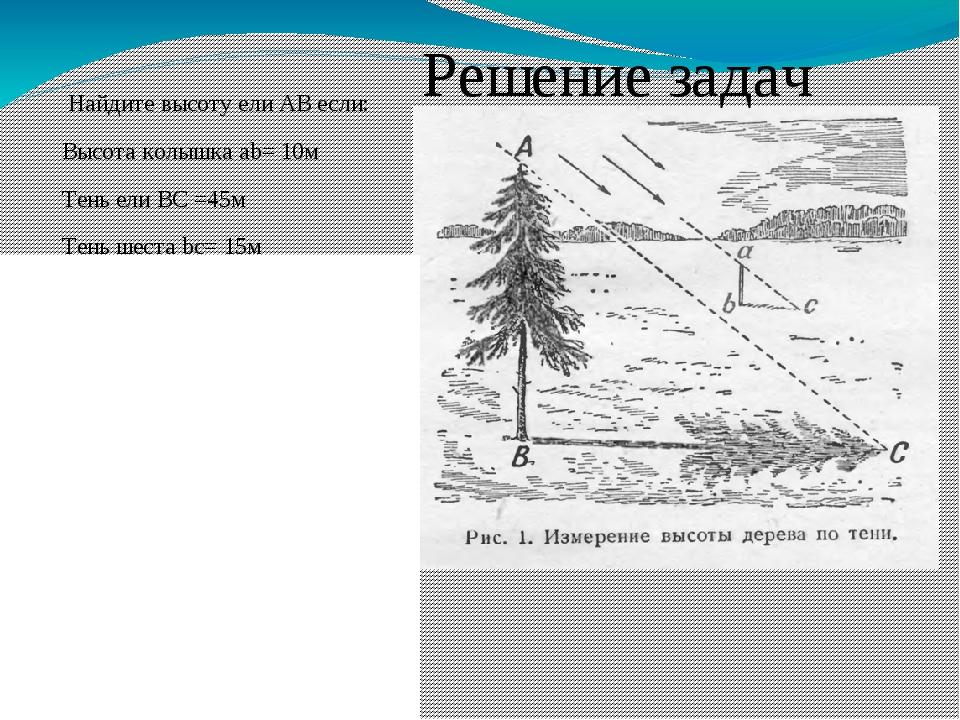 Найдите высоту ели АВ если: Высота колышка ab= 10м Тень ели ВС =45м Тень шес...