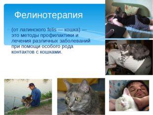 (от латинского felis — кошка) — это методы профилактики и лечения различных з
