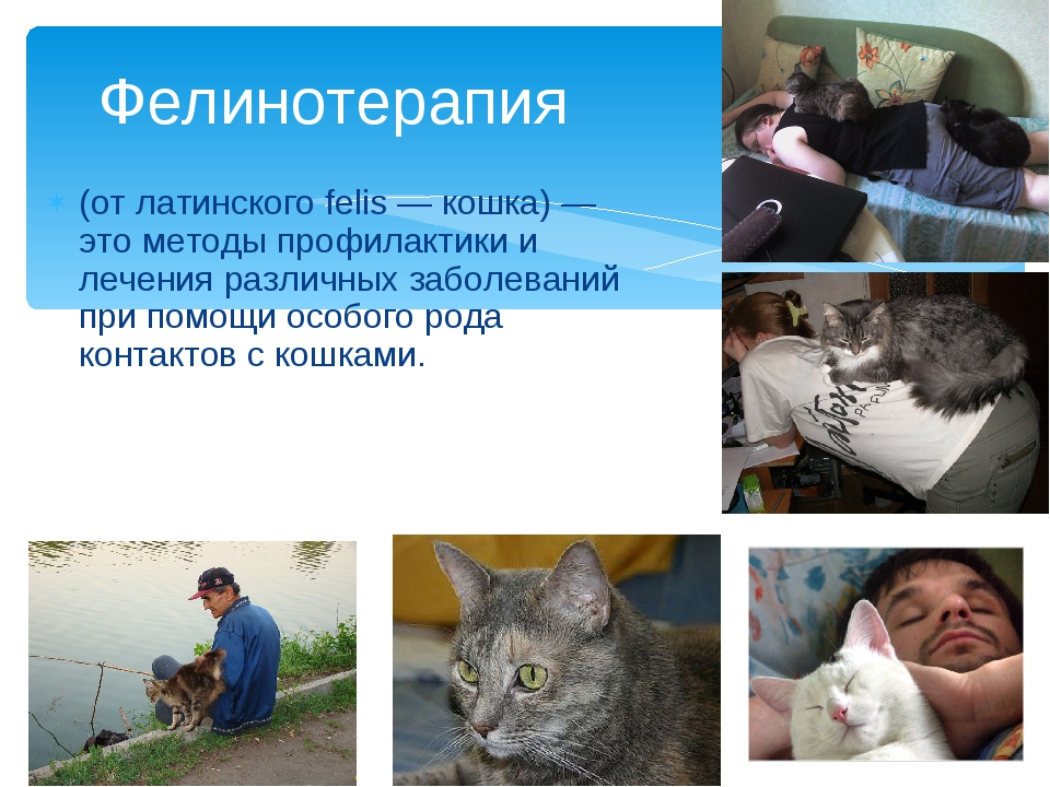 (от латинского felis — кошка) — это методы профилактики и лечения различных з...