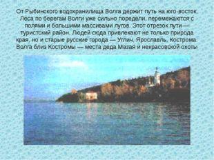 От Рыбинского водохранилища Волга держит путь на юго-восток. Леса по берегам