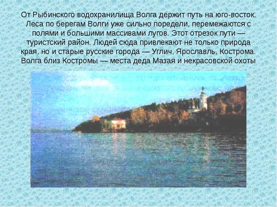 От Рыбинского водохранилища Волга держит путь на юго-восток. Леса по берегам...