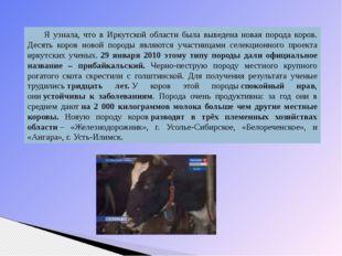 Я узнала, что в Иркутской области была выведена новая порода коров. Десять ко