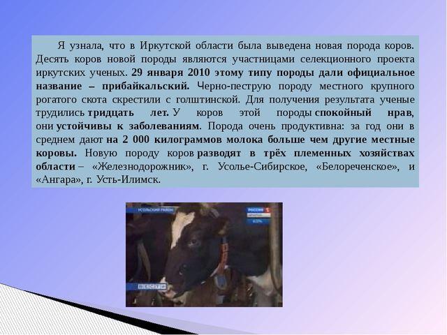 Я узнала, что в Иркутской области была выведена новая порода коров. Десять ко...
