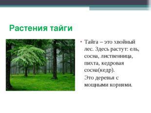 Растения тайги Тайга – это хвойный лес. Здесь растут: ель, сосна, лиственница