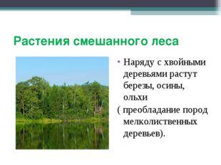 Растения смешанного леса Наряду с хвойными деревьями растут березы, осины, ол
