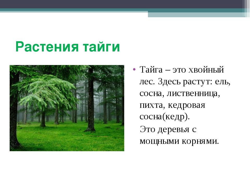 Растения тайги Тайга – это хвойный лес. Здесь растут: ель, сосна, лиственница...