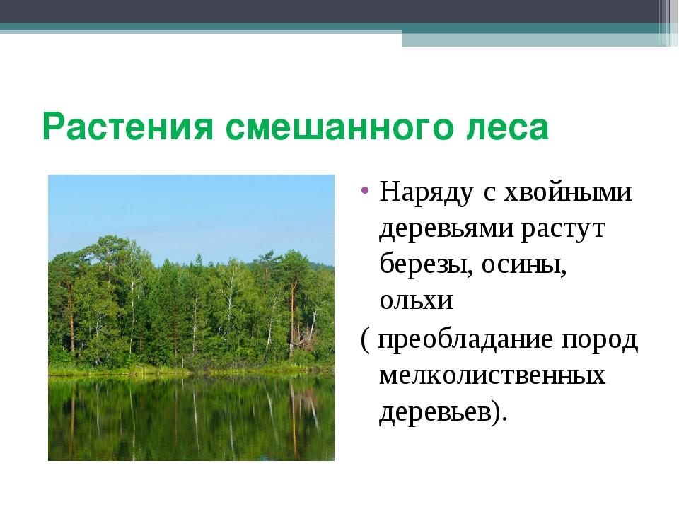Растения смешанного леса Наряду с хвойными деревьями растут березы, осины, ол...