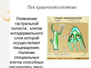 Тип кишечнополостные Появление гастральной полости, клетки энтодермального сл