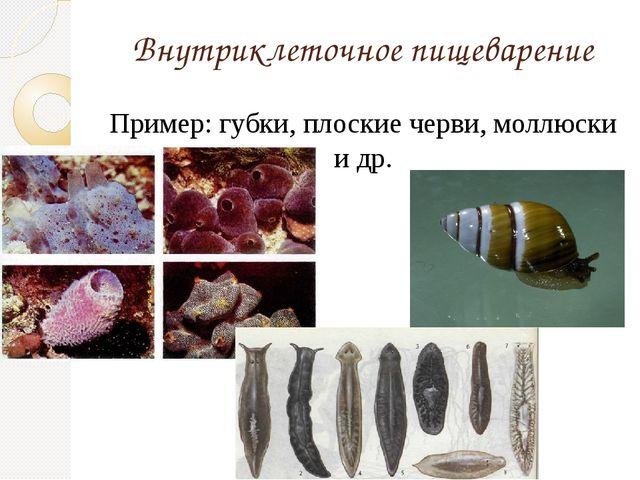 Внутриклеточное пищеварение Пример: губки, плоские черви, моллюски и др.