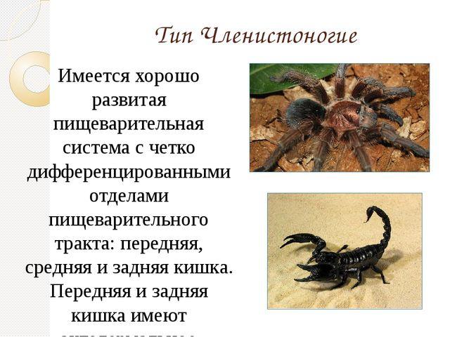 Тип Членистоногие Имеется хорошо развитая пищеварительная система с четко диф...