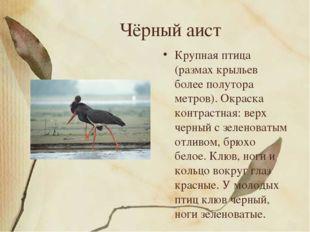 Чёрный аист Крупная птица (размах крыльев более полутора метров). Окраска кон