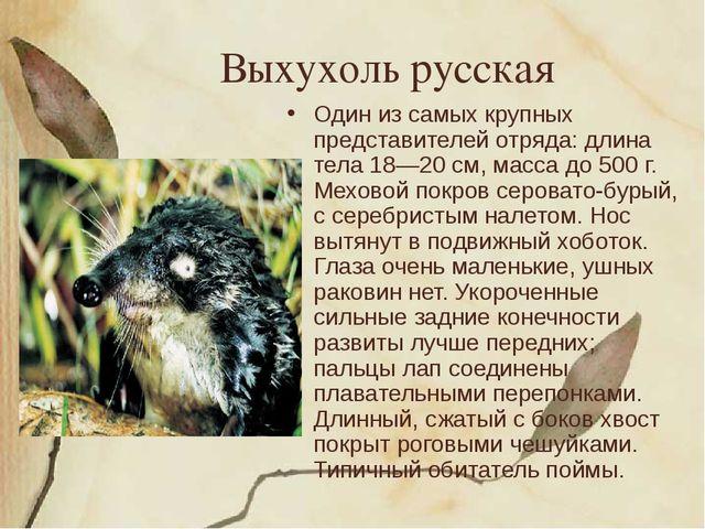 Выхухоль русская Один из самых крупных представителей отряда: длина тела 18—2...