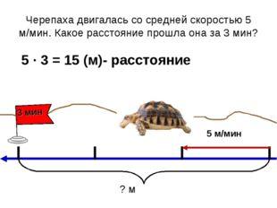 Черепаха двигалась со средней скоростью 5 м/мин. Какое расстояние прошла она