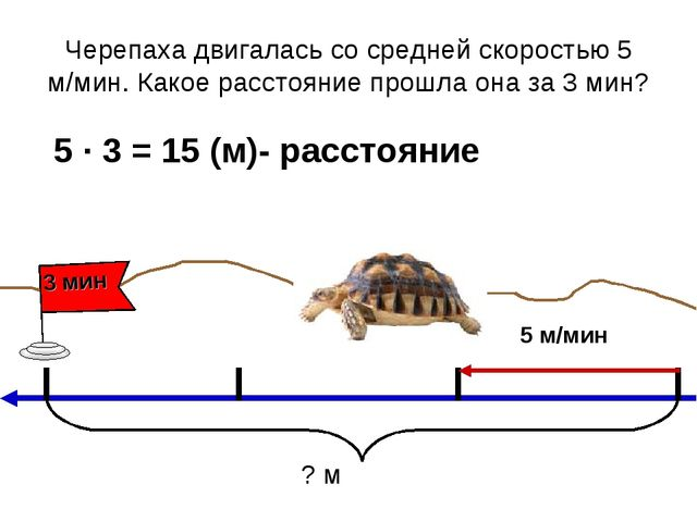 Черепаха двигалась со средней скоростью 5 м/мин. Какое расстояние прошла она...