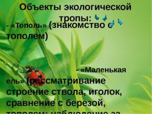 Объекты экологической тропы: - «Тополь» (знакомство с тополем) - «Маленькая е