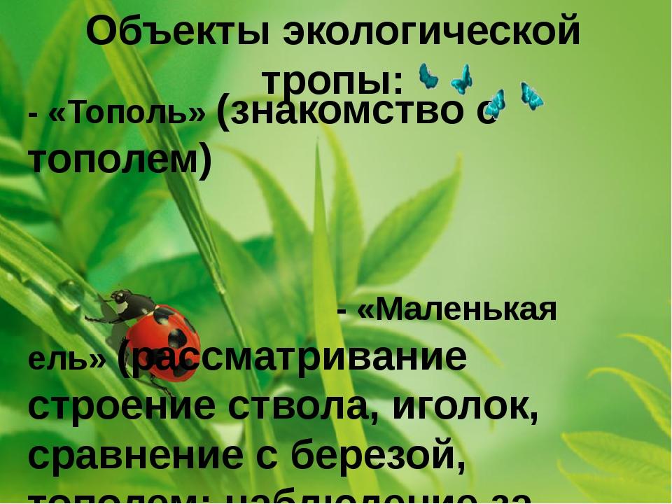Объекты экологической тропы: - «Тополь» (знакомство с тополем) - «Маленькая е...