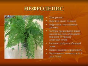 НЕФРОЛЕПИС (Папоротник) Выделено около 30 видов. Нефролепис теплолюбивое раст