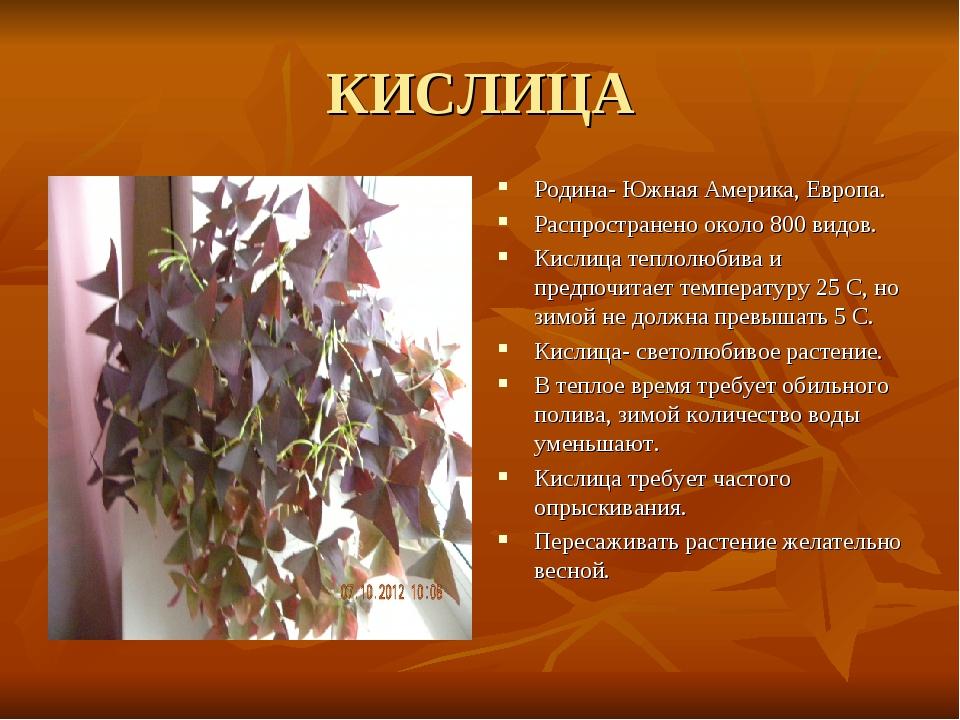 КИСЛИЦА Родина- Южная Америка, Европа. Распространено около 800 видов. Кислиц...