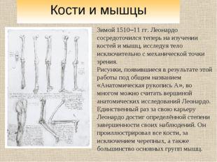 Зимой 1510–11 гг. Леонардо сосредоточился теперь на изучении костей и мышц, и