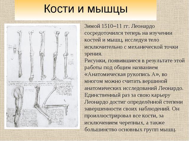 Зимой 1510–11 гг. Леонардо сосредоточился теперь на изучении костей и мышц, и...