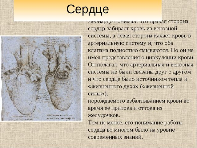 Леонардо понимал, что правая сторона сердца забирает кровь из венозной систе...