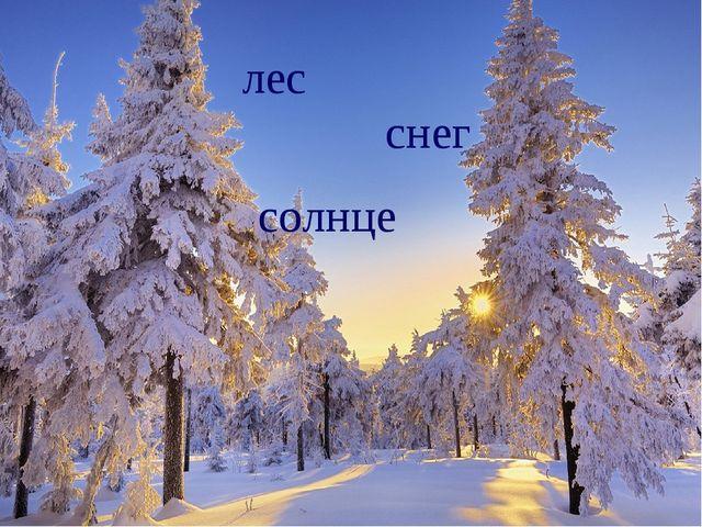 лес снег солнце