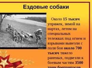 Ездовые собаки Около 15 тысяч упряжек, зимой на нартах, летом на специальных
