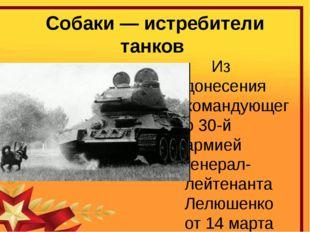 Собаки — истребители танков Из донесения командующего 30-й армией генерал-лей