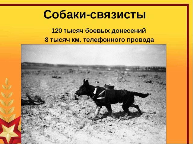 Собаки-связисты 120 тысяч боевых донесений 8 тысяч км. телефонного провода