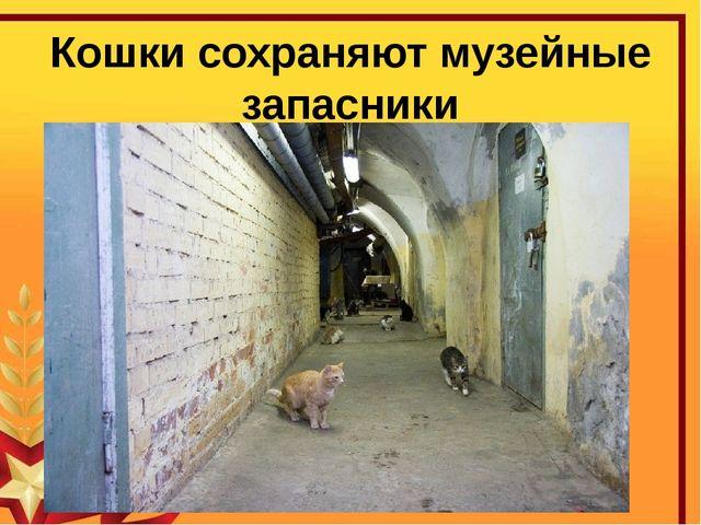 Кошки сохраняют музейные запасники