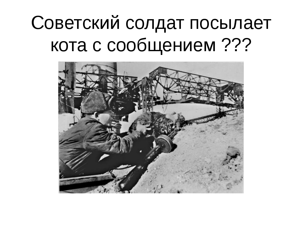 Советский солдат посылает кота с сообщением ???