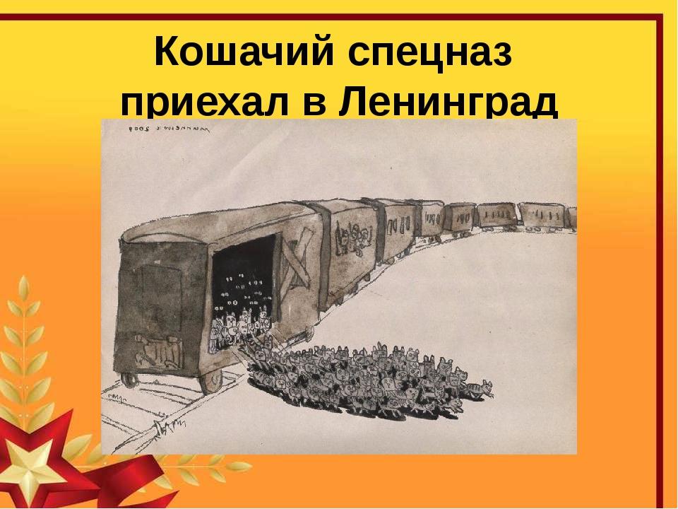 Кошачий спецназ приехал в Ленинград