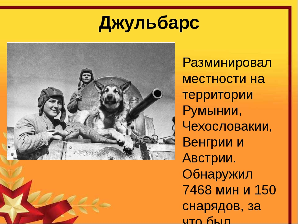 Джульбарс Разминировал местности на территории Румынии, Чехословакии, Венгрии...