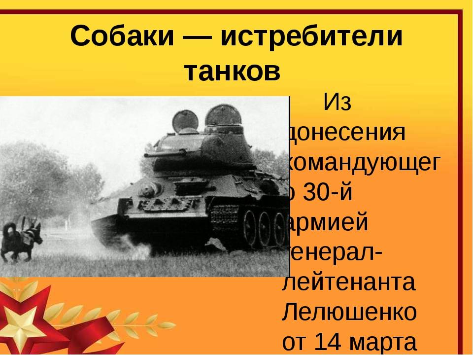 Собаки — истребители танков Из донесения командующего 30-й армией генерал-лей...