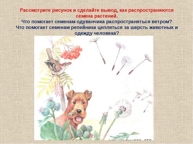 Рассмотрите рисунок и сделайте вывод, как распространяются семена растений. Ч...