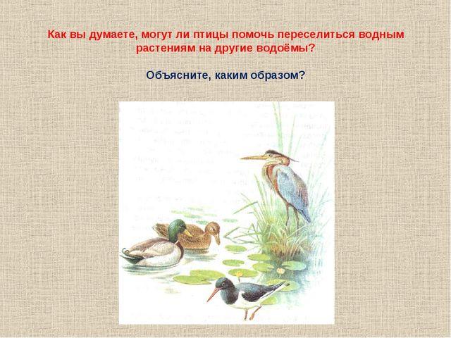 Как вы думаете, могут ли птицы помочь переселиться водным растениям на другие...