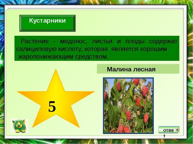 ответ Организмы, живущие в пятом ярусе смешанного леса, являются индикаторам...