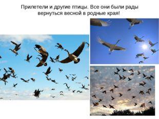 Прилетели и другие птицы. Все они были рады вернуться весной в родные края!