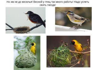 Но им не до веселья! Весной у птиц так много работы! Надо успеть свить гнезда!