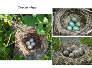 Снести яйца!