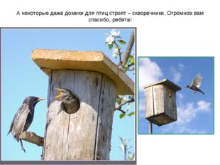 А некоторые даже домики для птиц строят – скворечники. Огромное вам спасибо,