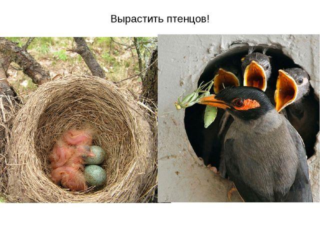Вырастить птенцов!