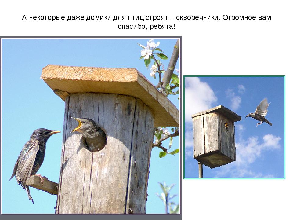 А некоторые даже домики для птиц строят – скворечники. Огромное вам спасибо,...